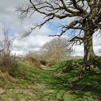 Offa's Dyke looking north at Trefonen, Shropshire - one of the points visited on the Special Offa Tragical History Virtual Tour with Professor Howard Williams, leaving at 16.30, Saturday April 4 2020 on Twitter and Facebook!