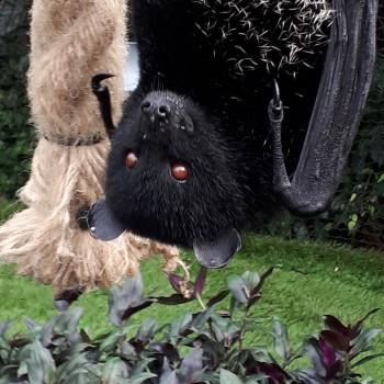 Livingstone's fruit bat