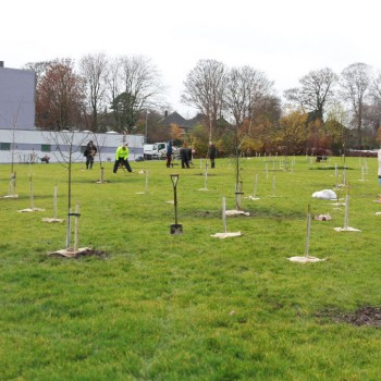 sustainability, green chester, trees, climate change