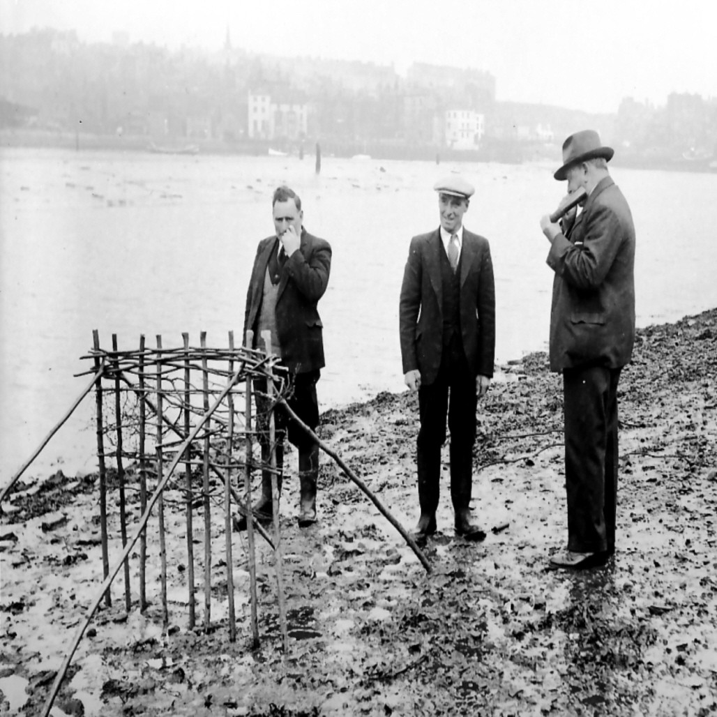 Whitby Penny Hedge Planting 1950: Copyright Whitby Museum [LS 0541-05] or Whitby Penny Hedge, Wikimedia Commons:  https://en.wikipedia.org/wiki/Penny_Hedge#/media/File:Whitby_Penny_Hedge.jpg